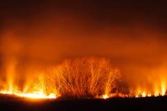 Field on Fire orange glow against the black sky Stock Photos