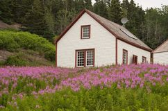 In a field of Fireweed. A hillside house with a field of purple fireweed in the foreground royalty free stock photo