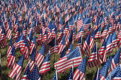 Field of Flags. Honoring veterans on veterans day Royalty Free Stock Photos