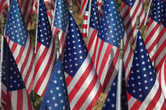 Field of Flags. Honoring veterans on veterans day Royalty Free Stock Images