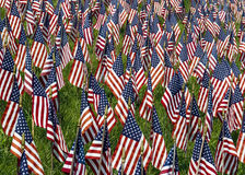 Field of Flags. A field of red, white, and blue US flags honoring fallen heroes who gave their lives in service of their country Royalty Free Stock Photography