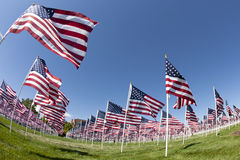 Field of Flags. Fish-eye view of a patriotic flag display from below Royalty Free Stock Photos