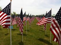 America. A field of flags in remembrance of veterans being blown by a gentle breeze Royalty Free Stock Photos