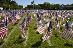 Field of flags Royalty Free Stock Image