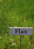 Field of Flax Stock Photos
