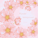 Field flover background 1. Flower background. Beautiful floral invitation card. Spring design Stock Image
