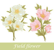Field flover set. Flower set. Beautiful floral collection with field plant. Element for design Royalty Free Stock Images