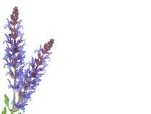 Field flower Royalty Free Stock Image