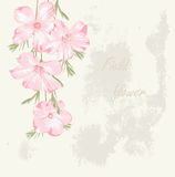 Field flower. Flower background. Beautiful floral invitation card. Spring design Royalty Free Stock Photography