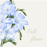 Field flower. Flower background. Beautiful floral invitation card. Spring design Stock Photos