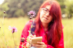 Field flower background of botanist. Photo of field flower on background of female botanist in woods during day Royalty Free Stock Images