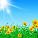 Field of flower with bright sun Stock Photo