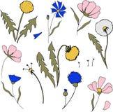Field flower in cartoon style. Vector dandelions, cornflowers and cosmos flowers. Wild botanical bloom. Great for tea p. Field flower in cartoon style. Vector stock illustration