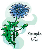 Field flower cornflower. Vector background Stock Image