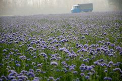 Field, Flower, Plant, Wildflower