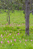 Field of flower Stock Photography