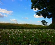 Flower field & sky nature background Royalty Free Stock Images