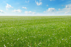 Field with flowering flax and sky Royalty Free Stock Photos