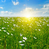 Field with flowering flax and sun Stock Photography