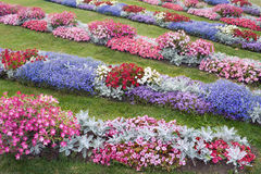 Field of flowers-1. Flower diversity of a Peterhof parks Royalty Free Stock Images