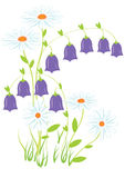Field flowers. Illustration. Camomile and bells on white background Royalty Free Stock Photos