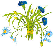 Field Flowers. Bouquet of Blue Field Flowers Royalty Free Stock Photography