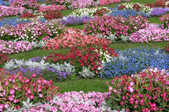 Field of flowers-2. Flower diversity of a Peterhof parks Stock Photo