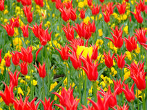 Field of flowers 2 stock image