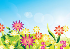 Field of flowers. Sun shining over pretty flowers in field Royalty Free Stock Photo