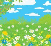 Field with flowers. Vector illustration of a summer field with wild flowers, against a blue sky with white clouds Royalty Free Stock Photo