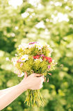 Field flowers. Hands holding a bunch of field flowers royalty free stock photography