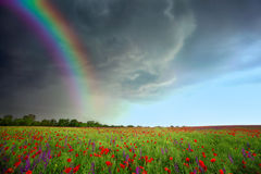Field of flowers. With storm clouds and rainbow royalty free stock images