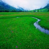 Field of flowers. On summer,Siguniang,china stock photo