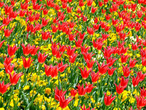 Field of flowers 3 Stock Images