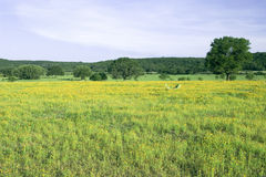 Field of Flowers. From the hill country, shot near Buchanan Dam, Texas, in the spring Stock Images