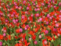Field of flowers. Field of different flowers - shallow depth of field Royalty Free Stock Images