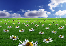 Field of flowers. A background of a field of flowers Royalty Free Stock Photography