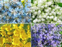 Field flowers abstract summer background Royalty Free Stock Images