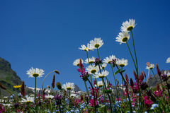 Field flowers against blue sky background Stock Photos