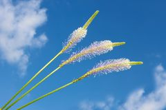 Field flowers against the blue sky with clouds Stock Photography