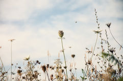 Field flowers in autumn Royalty Free Stock Photos