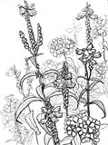 Field flowers B&W. Field flowers black and white pencil drawings Stock Images