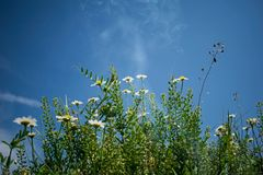 Field flowers on a beautiful summer day royalty free stock photos