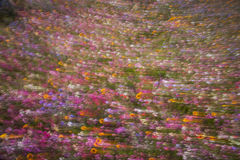 Field of flowers blur Royalty Free Stock Photography