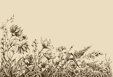 Field flowers. Border drawing, page decoration Royalty Free Stock Images