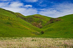 Field of flowers at bottom of hill Royalty Free Stock Photography