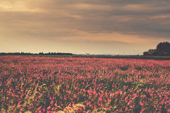 Field of flowers. In Burgenland, Austria stock photos