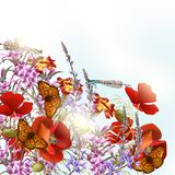 Field flowers with butterflies. Nature background with field flowers and butterflies Stock Photography