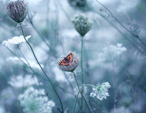 Field with flowers and butterfly Royalty Free Stock Photography