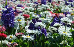 Field of flowers. Close up of some flower in spring Stock Image